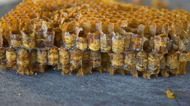 как выглядит перча пчелиная в сотах фото