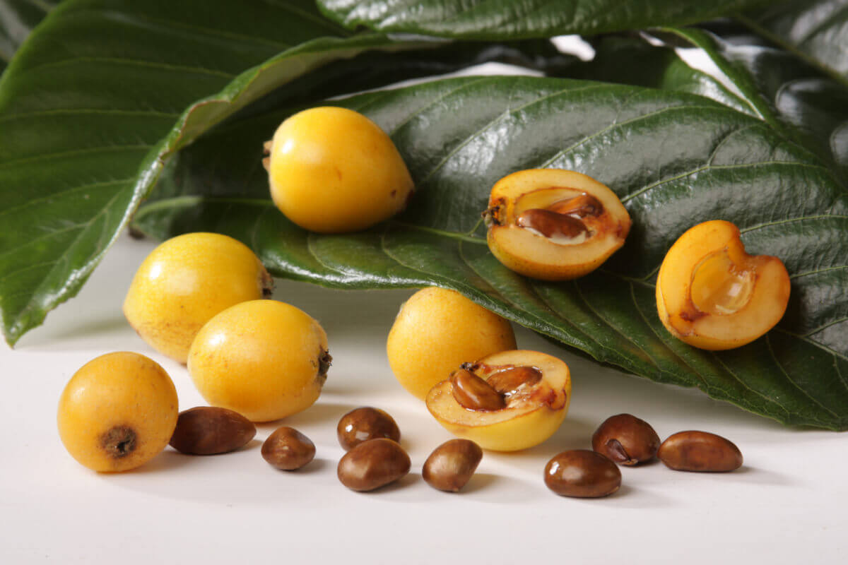 Что такое мушмула - как выглядит фрукт и семена