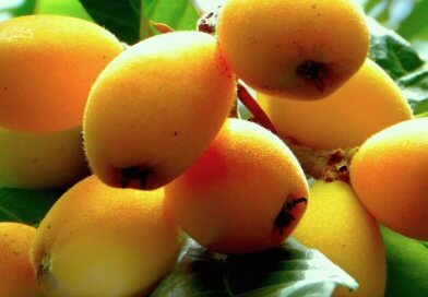 мушмула фрукт что это фото