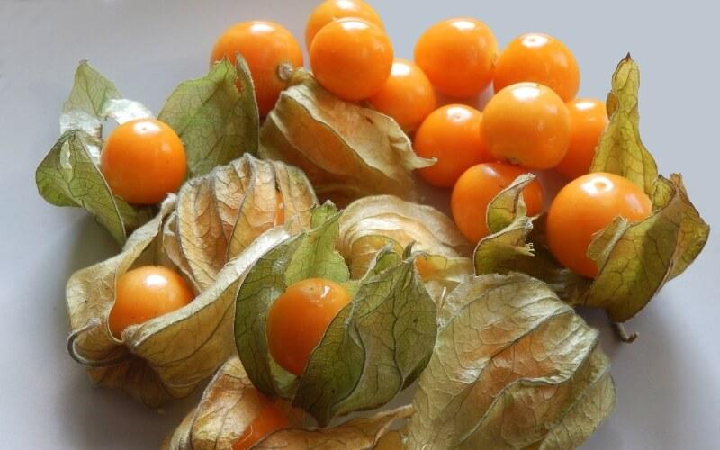 Физалис овощной фото
