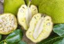 Джекфрут фото плода внутри и снаружи